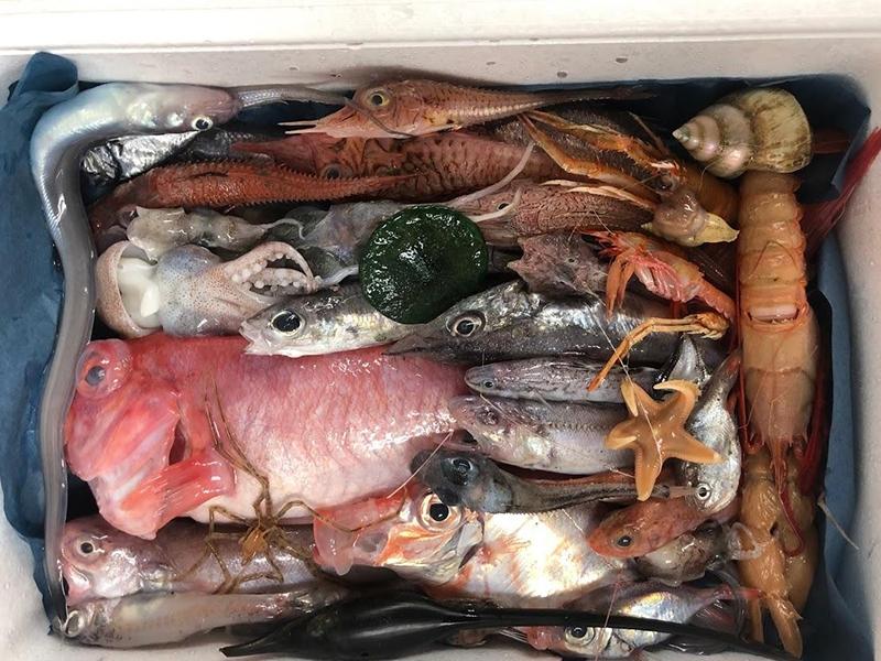 水揚げされた深海魚がその日のうちに発送される「深海魚直送便」(写真提供:青山沙織氏)